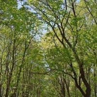Весна в парке. :: Андрий Майковский