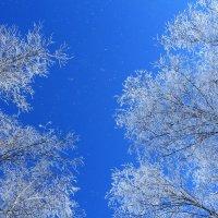 зимний пейзаж! :: Евгений Воронков