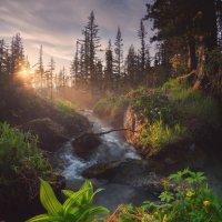 Александр EGRA - Таежный глаз :: Фотоконкурс Epson