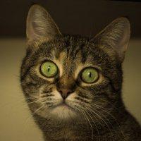 Кошачий портрет :: Юля Колосова