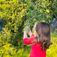 Яблочный сезон.. :: Анна Ларина