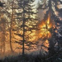 Солнце поднимается из-за леса :: Сергей Чиняев