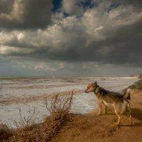 Собака и море :: Алексей Содоль