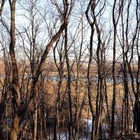 Весна в Коломенском :: Владимир Болдырев