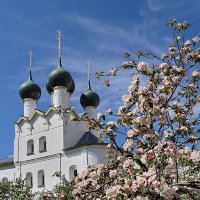 Яблони в цвету :: Николай Белавин