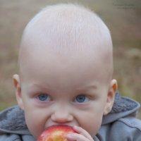 Осенние яблочки :: Татьяна Сушко