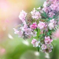 Цвет весны :: Альберт Ханбиков