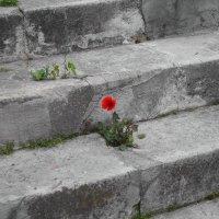Властелин камня :: Михаил Зобов