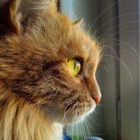 Мурка смотрит в окно :: Борис Иванов