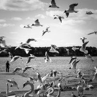 птичье нашествие :: Naty ...