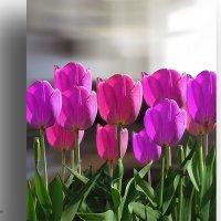 Розовые тюльпаны. :: Аnatoly Polyakov