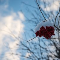 Шапочка из снега :: Анна Салтыкова