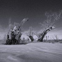 Парк Юрского периода :: Виктор Четошников