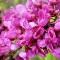 Весна!!! :: СветЛана D