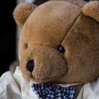 Медведь :: Александр Семеняка