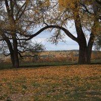 Осень листья разбросала :: Антонина