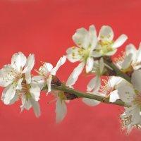 Весна :: Наталья Джикидзе (Берёзина)