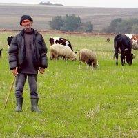 пастух.  самая древняя профессия. :: Ivana