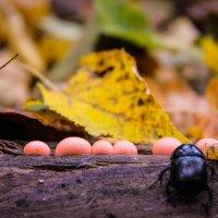 лесной житель :: Екатерина Исаченко