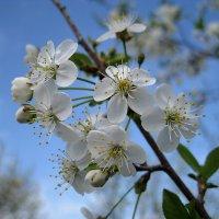 Весна :: Юрий Колчин