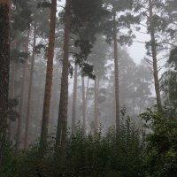 Туман. :: Валерия  Полещикова