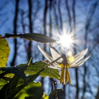 ***Весна. :: mikhail grunenkov