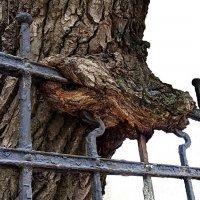 Древесные челюсти... :: Лесо-Вед (Баранов)