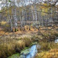 В Гороховецком лесу :: Марина Ломина