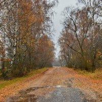 Осенний  день. :: Валера39 Василевский.