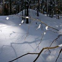 солнце в лесу :: Андрей Дружинин