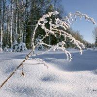 зима :: Андрей Дружинин