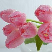 тюльпаны :: Olena