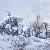 Заснеженные тропы Полюда :: Стил Франс