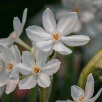 Весна идёт, весне дорогу :: Вера Лучникова