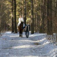 Чистые 10 метров в весеннем лесу :: Владимир Бондарев
