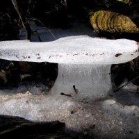 ледяной гриб :: doberman