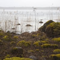 на озере туман... :: liudmila drake