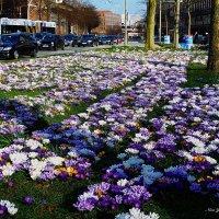 Городские цветы :: Nina Yudicheva