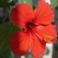 аленький цветочек :: Alexandr Staroverov