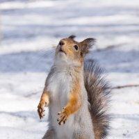 Господи кинь орехов!!! :: Alex Bush