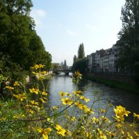 Желтые цветы на фоне воды :: Наталья (Nata-Cygan) Цыганова