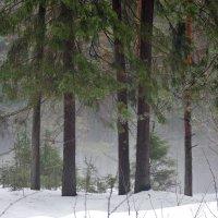 Весенний туман :: Исаков Александр