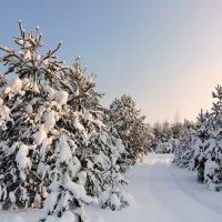 Зимний лес. :: Hаталья Беклова