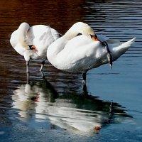 Кто красивей и белее?! :: Наталья