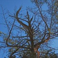 Необычное древо... :: Павел Зюзин