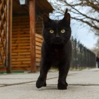 Крымский котейка :: Ардалион Иволгин