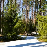 Весенний лес :: Милешкин Владимир Алексеевич