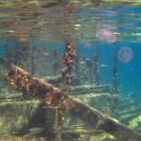 Подводный мир затонувшего корабля :: Lukum