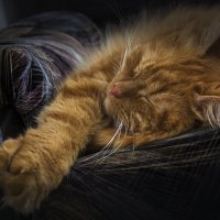 Сладкий сон после обеда :: Natalia Furina
