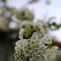Весна ! :: valeriy khlopunov